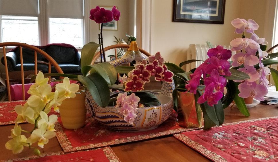 Apr 20 Orchids